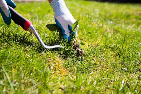 Weeds, Gardening, Lawn