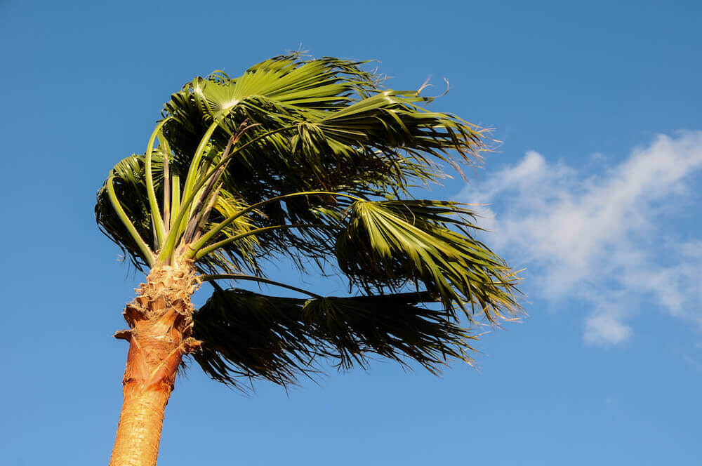 http://duda-sod.com/wp-content/uploads/2016/06/palm-tree-blowing-in-the-wind.jpeg