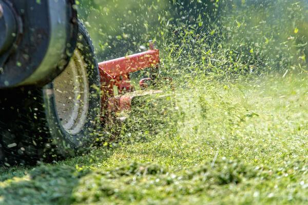 maintaining st. augustine grass