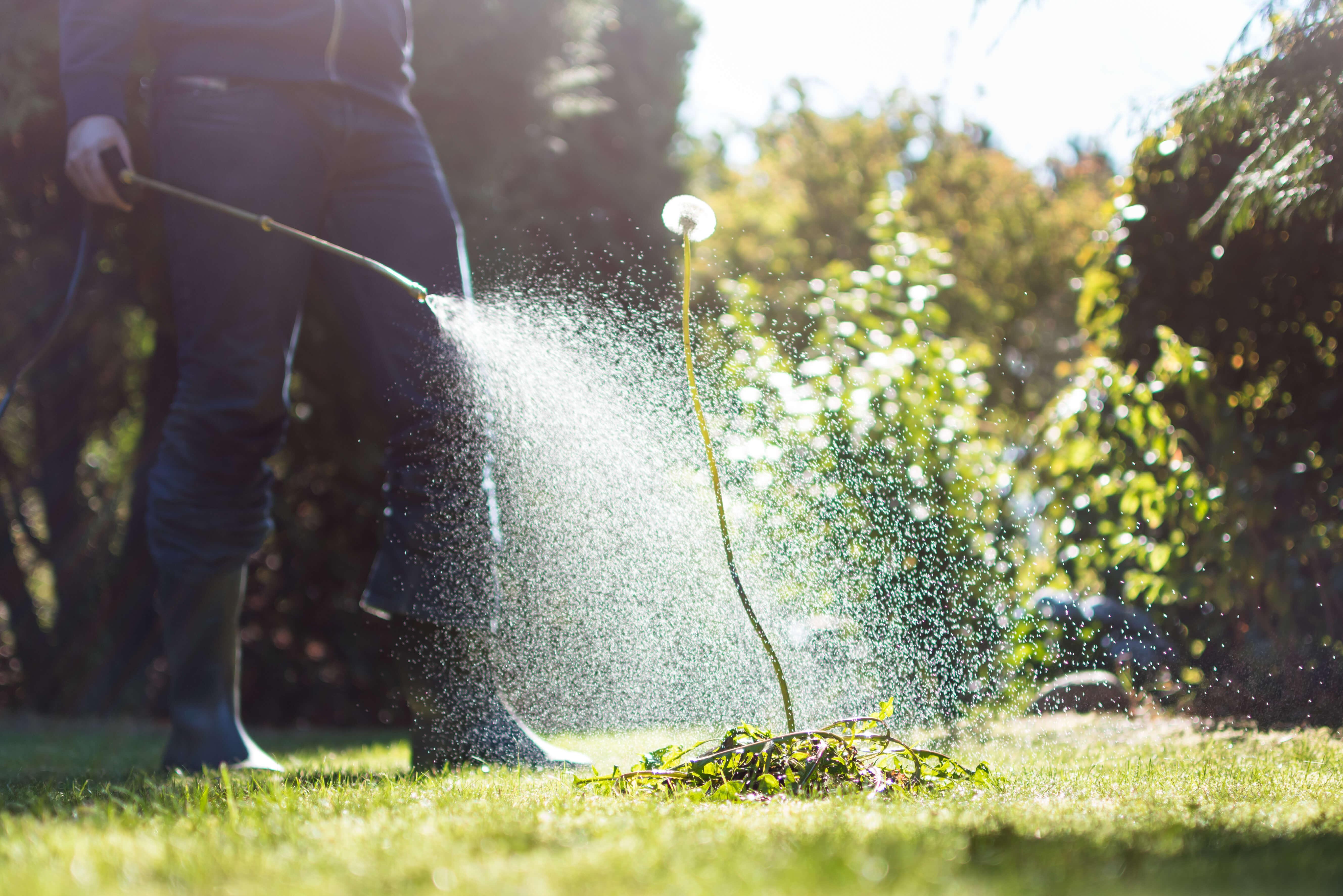 Lawn Herbicides
