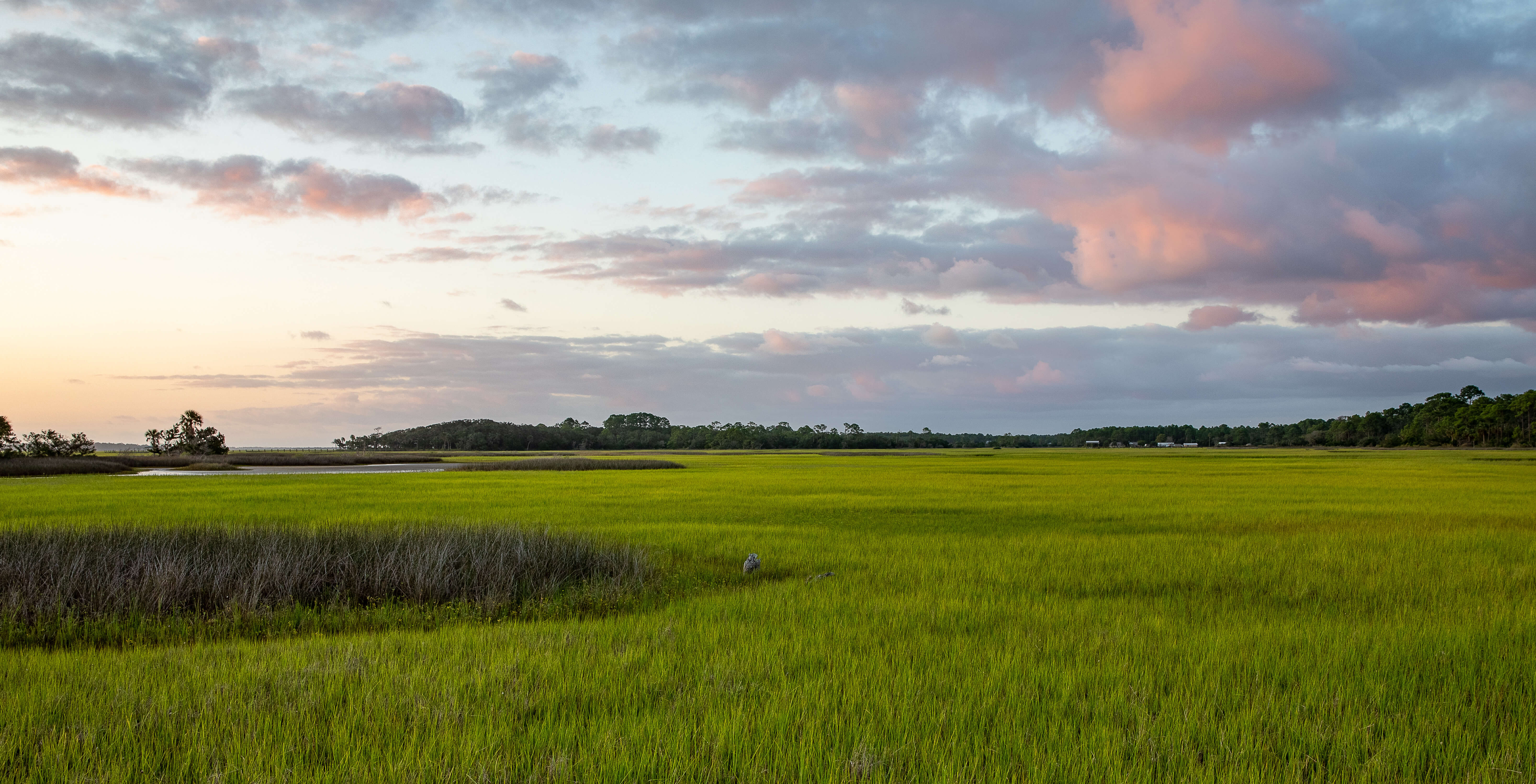 Florida grass growing season is in Spring, but typically can grow all year long in Florida.