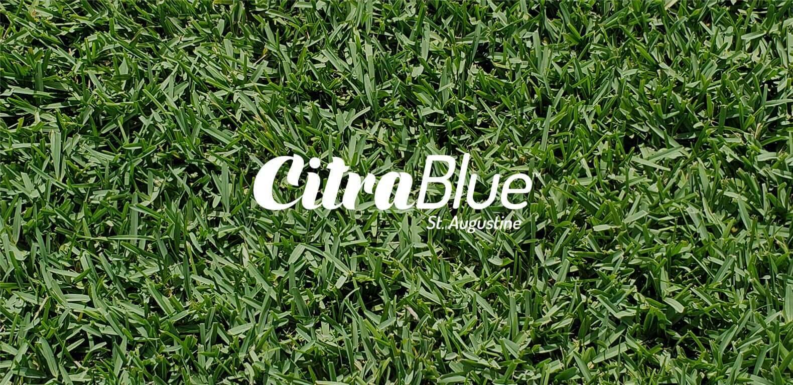 Duda_CitraBlue_LogoOnGrass